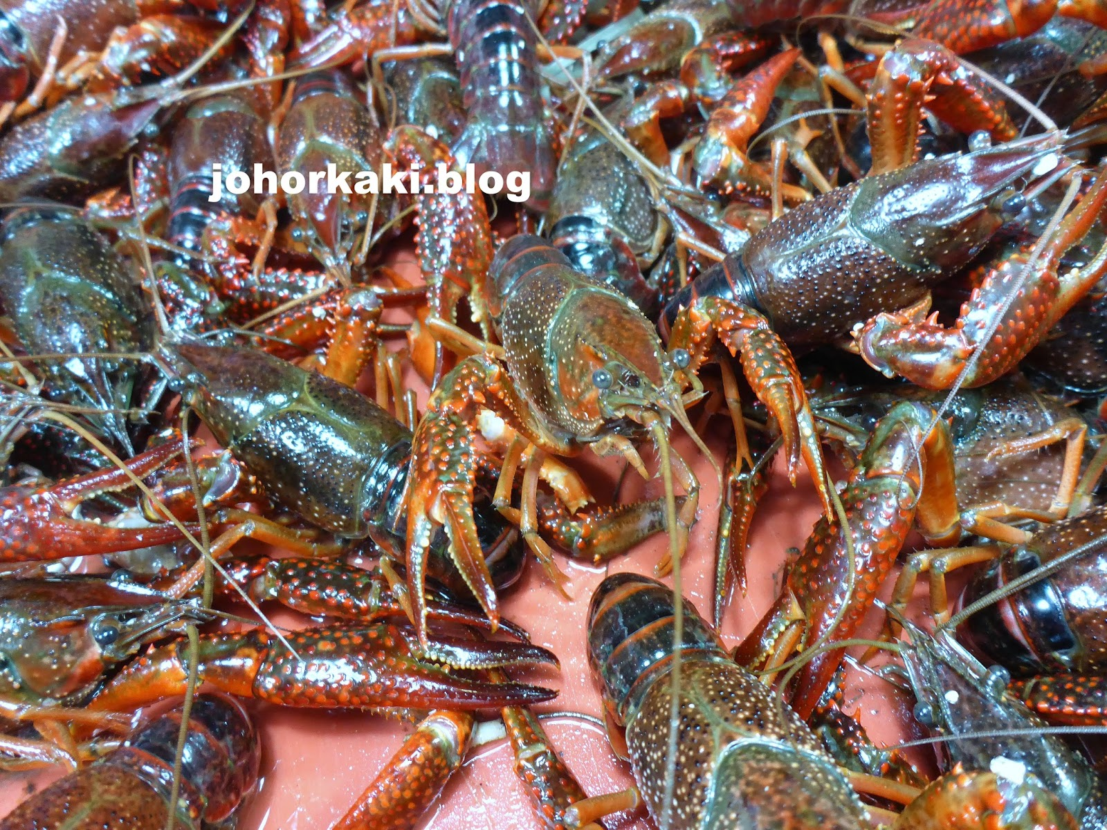 how to raise crayfish for food