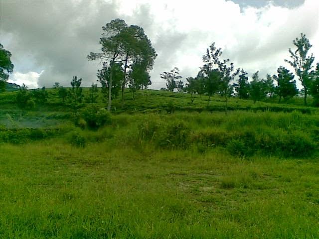 Foto%25285334%2529 Jual Tanah Di Puncak 2, Murah Jual tanah di cipanas jual tanah di puncak jual tanah di puncak2