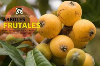 Arboles y arbustos frutales para el bosque de alimentos