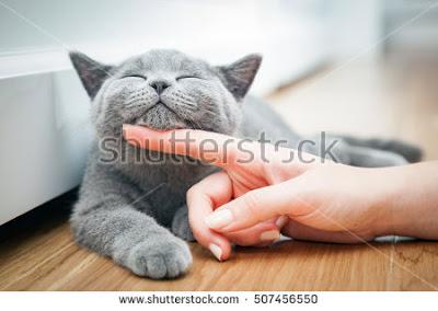 Inilah Alasan Mengapa Orang Suka Dan Betah Melihara Kucing
