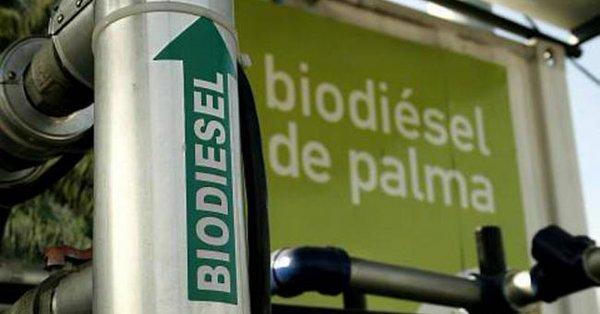 EUROPA: El uso de biodiésel de palma se reducirá progresivamente hasta llegar a cero en 2030.