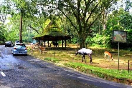 Taman Safari Indonesia : Tempat wisata di bogor yang indah dan menarik
