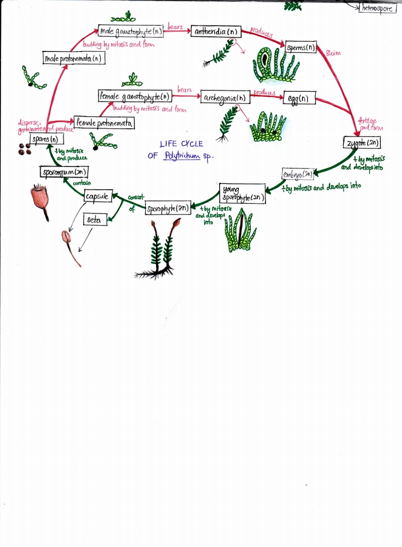 Biology Is To Serve Mankind Concept Map Biodiversity
