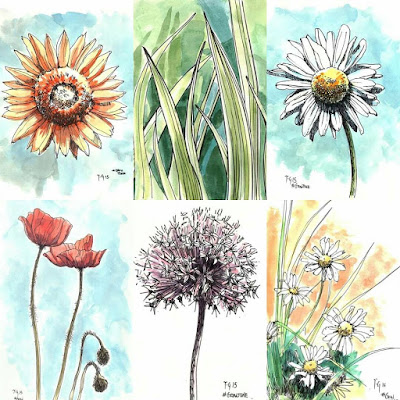 Flower ink sketches by Anthony Greentree