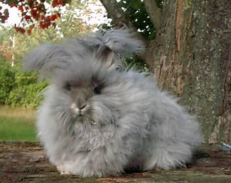 General information on rabbit neutering : AskVet