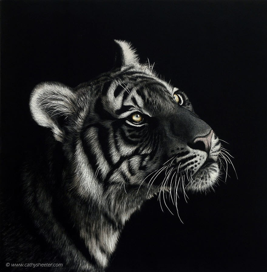 01-Tiger-Cathy-Sheeter-Wildlife-Scratchboard-Drawings-www-designstack-co