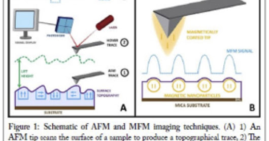 Magnetic Force Microscopy for Nanoparticle Characterization