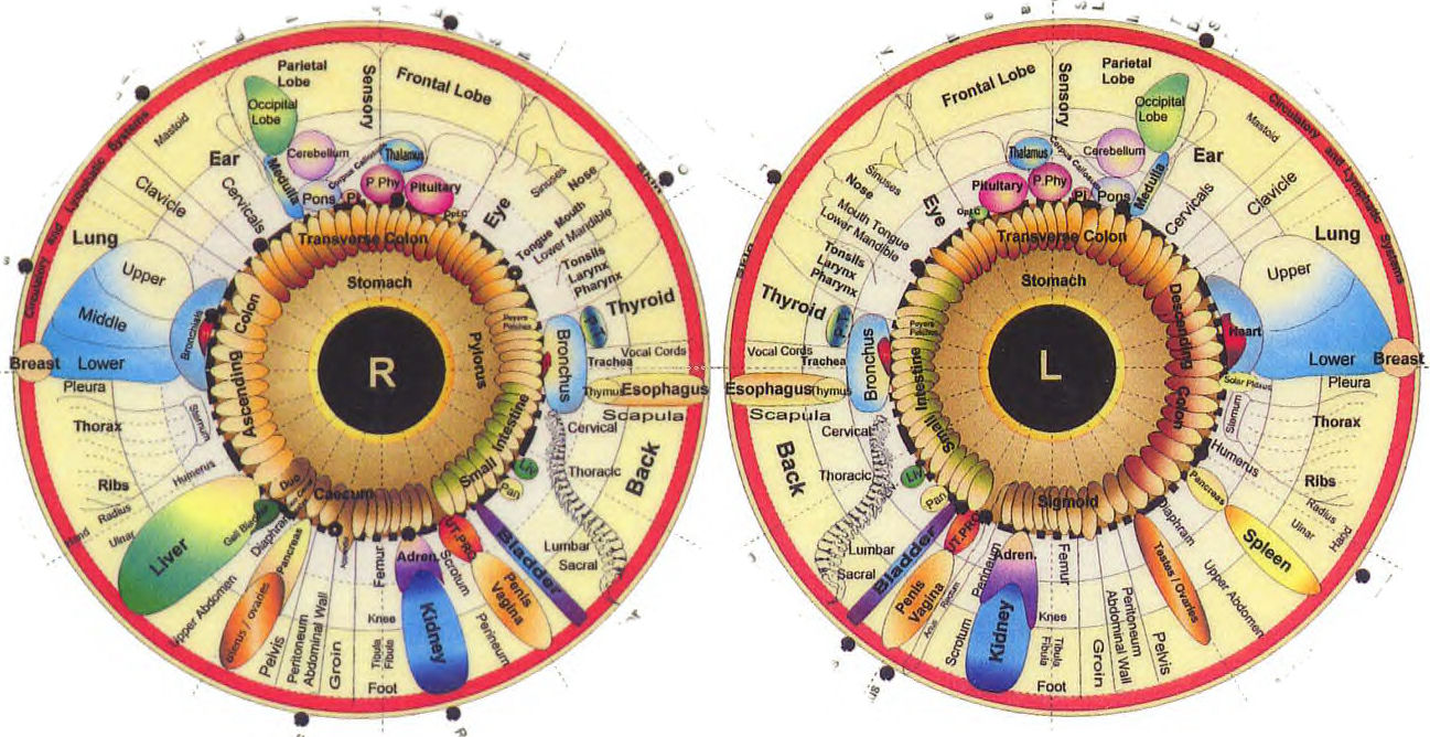 Iridology also herbal picnic  sclerology rh herbalpicnicspot