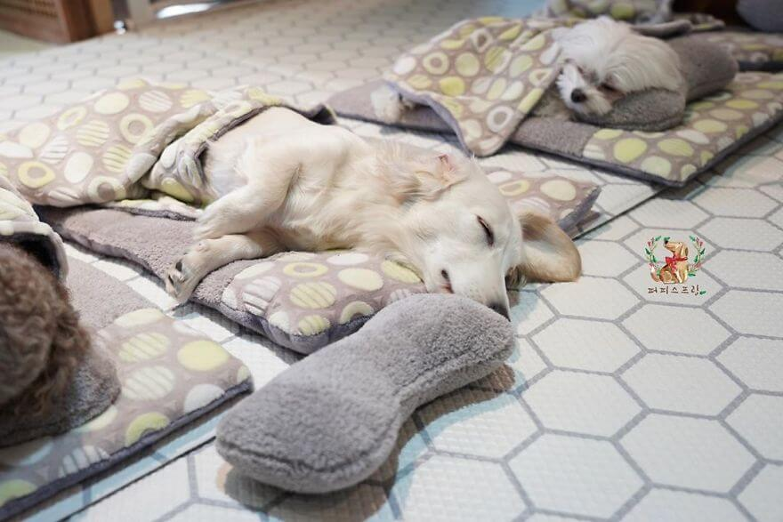 Adorable Pictures Puppies Are Napping In A Puppy Daycare Center