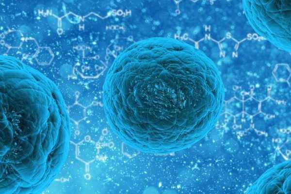 Células-tronco de tumores no combate ao câncer