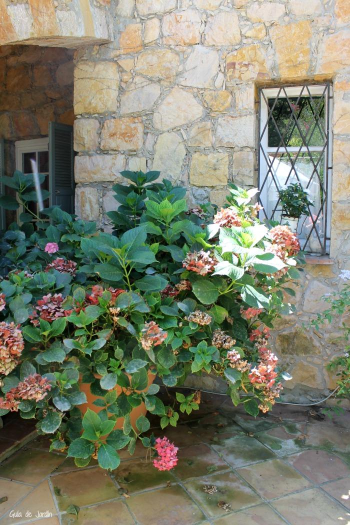 Maceta con hortensias en el patio trasero