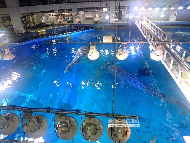 沖繩自由行,沖繩怎麼玩,沖繩古宇利大橋,美麗海水族館