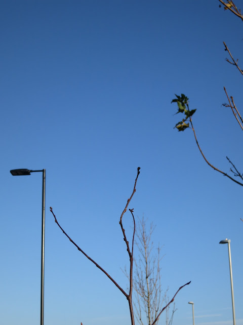 Lamp post, small tree with leaf buds, autumn leaves about to fall from second tree.