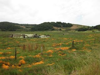 Pickleweed at the Elkhorn Slough, Elkhorn, California