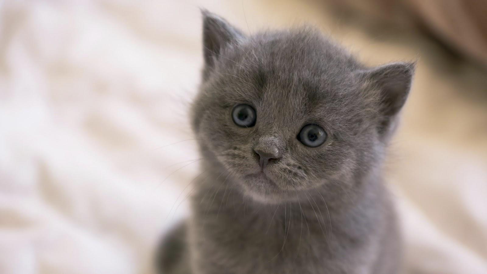 قطط,قط,بسينة,cats,photos cats, photos,beautiful cats, Wallpapers, Wallpapers cats,صور قطط,خلفيات قطط,