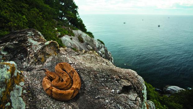 Sitio Al Que No Iras, La Isla De Las Serpientes 2