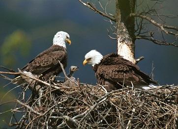 O Ninho Da águia Pregações E Estudos Bíblicos