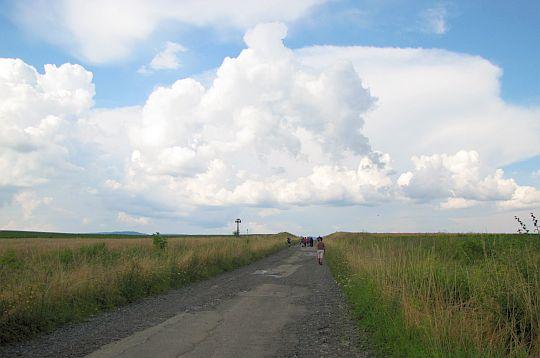 Pola przed Latonovcami.