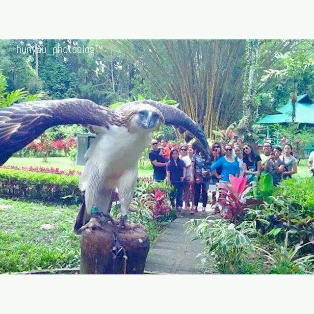 The Philippine Eagle Center, Davao