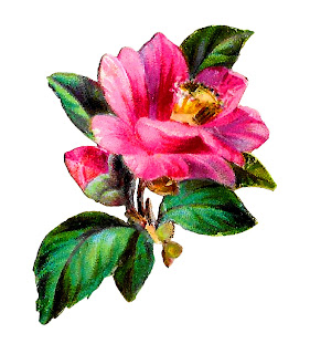 flower camellia image transfer download clipart crafting