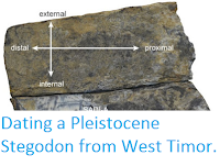 http://sciencythoughts.blogspot.co.uk/2016/03/dating-pleistocene-stegodon-from-west.html