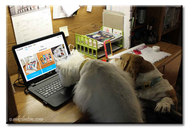 Two dogs ordering online at laptop