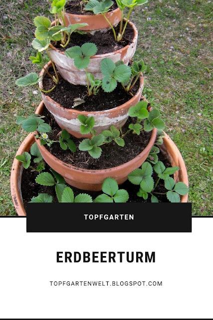 Einen Erdbeerturm selber bauen ist nicht schwer. Zudem gehört er in jeden Topfgarten. Erdbeeren kann man nämlich super in Töpfe pflanzen. #erdbeerturm #erdbeeren #garten #topfgartenwelt