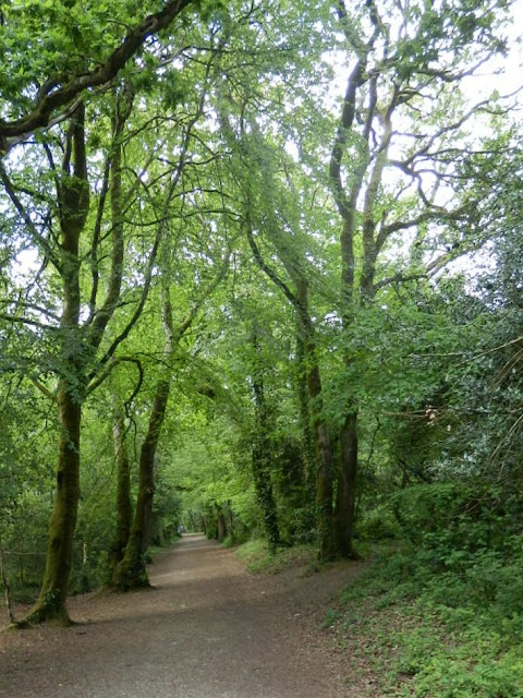Pentewan Trail - trees and pathway