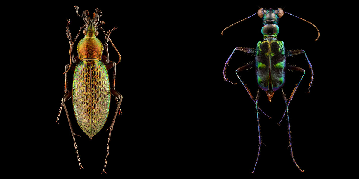 Fotógrafo faz o maior sucesso ao registrar detalhes impressionantes de insetos