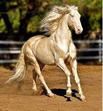 أجمل حصان