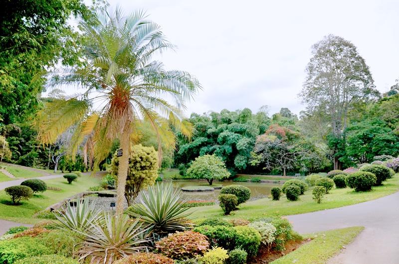Peradeniya botanical garden--things to do in kandy