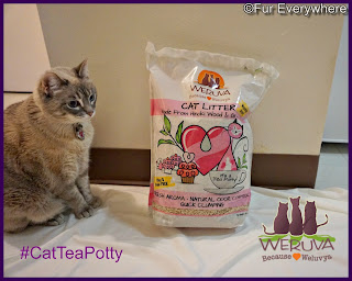 Milita is excited about trying Weruva's new cat litter made with Hinoki Wood & Green Tea.