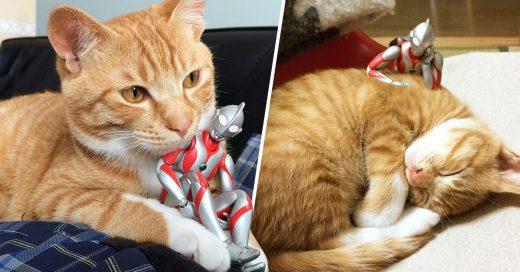 Gatito abandonado es rescatado y su mejor amigo es Ultraman