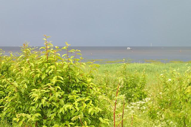 Kirkkaanvihreä rantakasvillisuus on hurjassa kontrastissa mustanpuhuvan taivaan kanssa, horisontissa vene