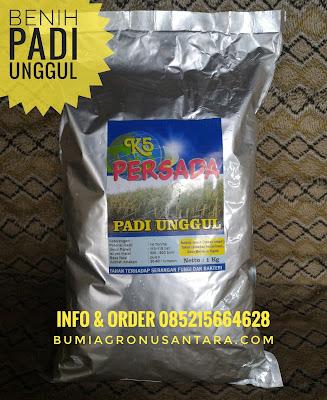Benih Padi K5 Persada Kualitas Unggul | Bumi Agro Nusantara
