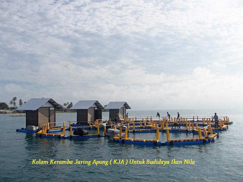 Gambar Kekurangan Kolam Keramba Jaring Apung ( KJA ) Untuk Budidaya Ikan Nila