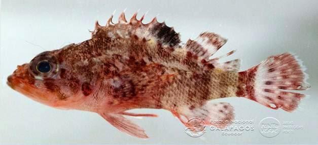 nueva especie pez islas galapagos
