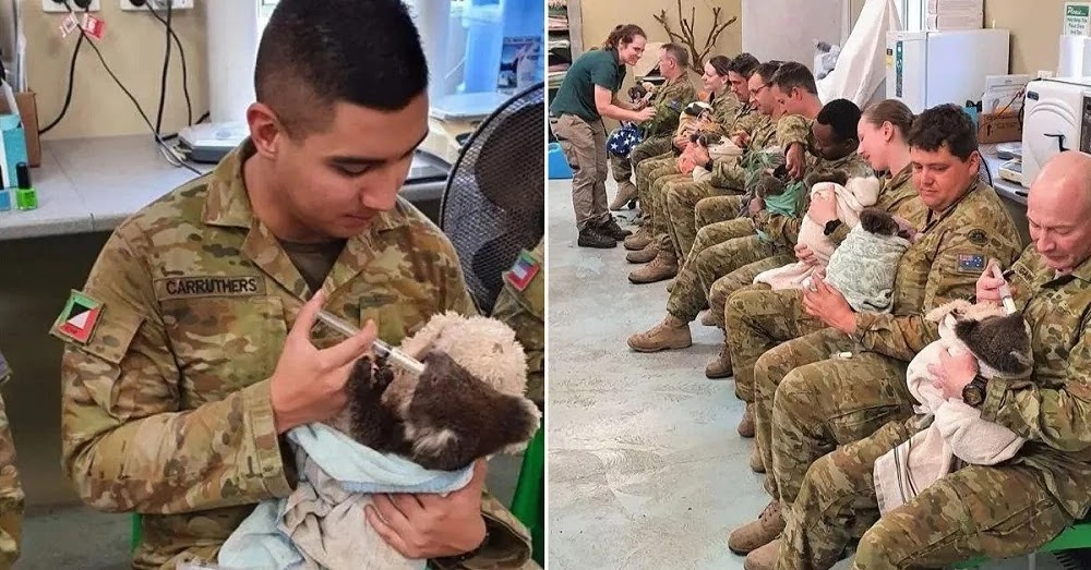 Australian Soldiers Cuddle And Take Care Of Displaced Koalas