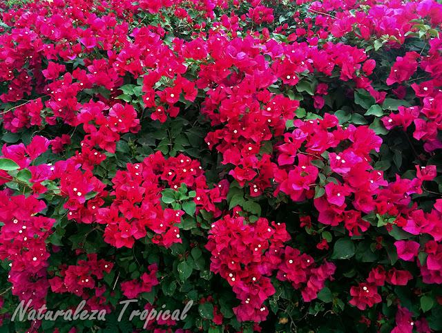 Naturaleza tropical plantas con flores que no lo son en realidad - Cuales son las plantas con flores ...