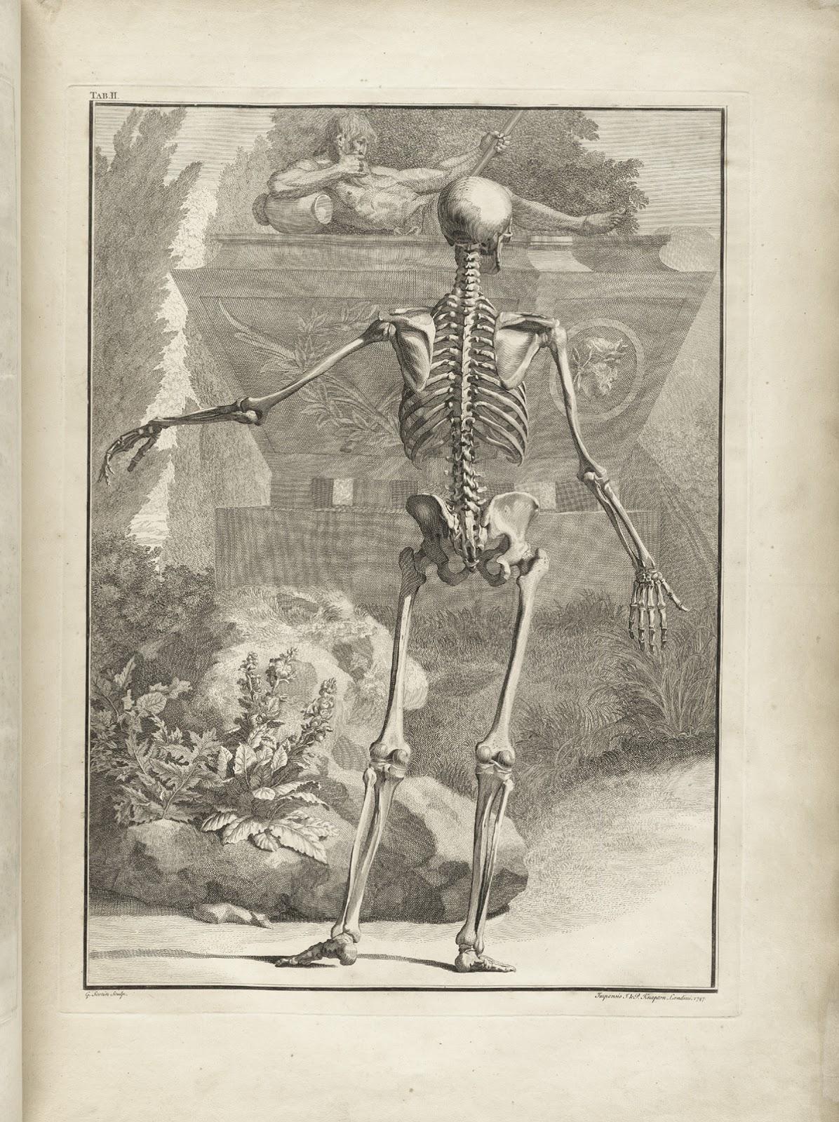 4thYearProject: Bernhard Siegfried Albinus on human anatomy