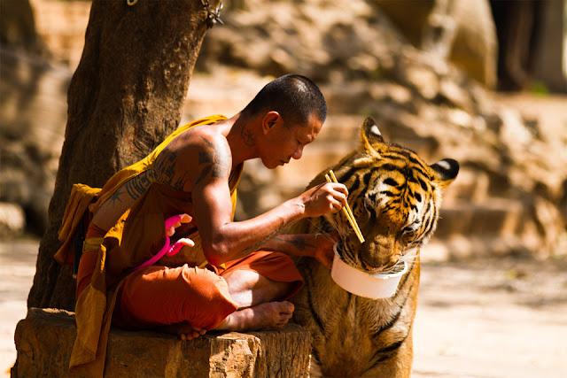 monaco tigre foto