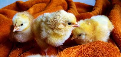 Manfaat hewan bagi manusia