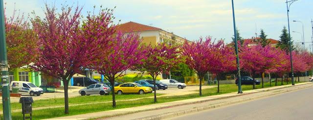 Όταν ένα δένδρο....της Δομνίκης Καράντζιου