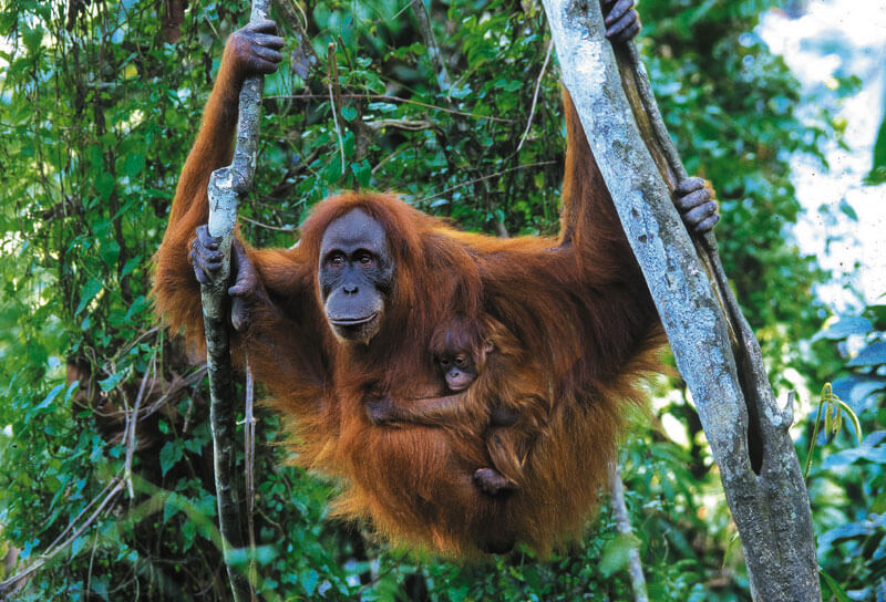 10 Hewan langka di Indonesia