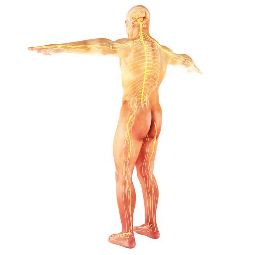 Como Curar El Nervio Ciatico - 5 Remedios Para Calmar El Dolor ...