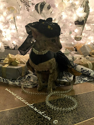 Coco Cornish Rex Couture Elegant NYC