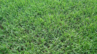 Bermuda Grass & Centipede Grass