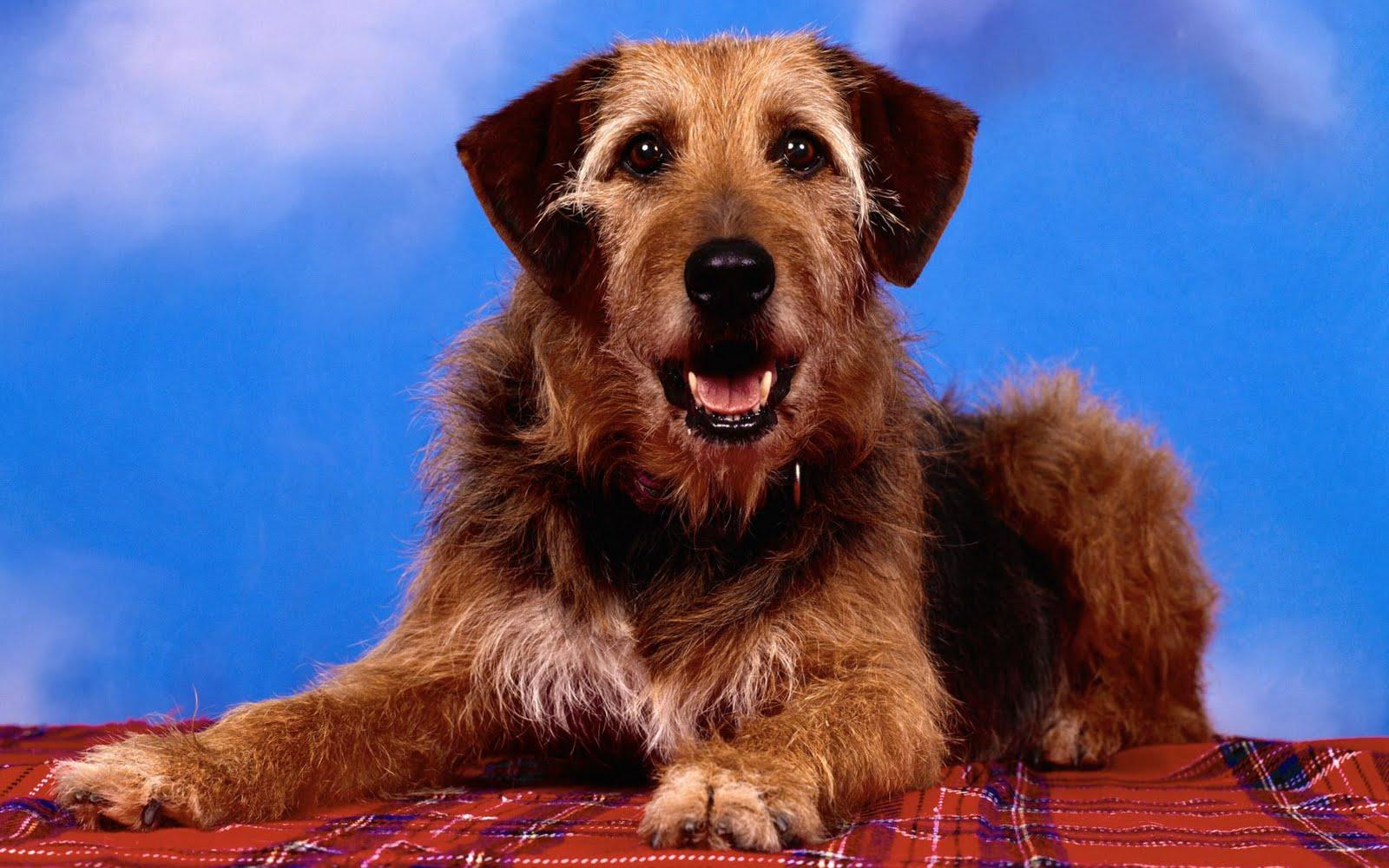 fondos-wallpapers de perros-dogs-pets