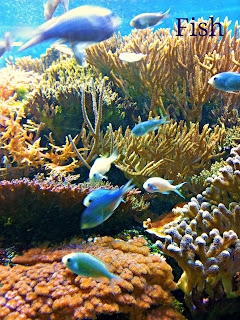 London zoo, zoo, fishes