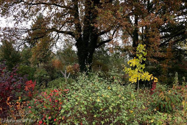 scène automnale jardin 2016